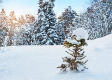 Nieva en el bosque del invierno Fotografía de archivo