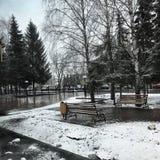 ¡nieve! Imagen de archivo libre de regalías