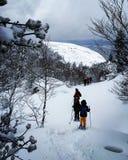 Nieve Стоковое Изображение RF