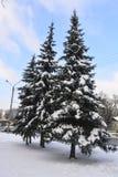 Nieve abrigada picea Foto de archivo libre de regalías