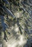 Nieve acumulada por la ventisca de la rama de árbol en haz del sol Foto de archivo
