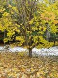 Nieve antes de Halloween imagen de archivo