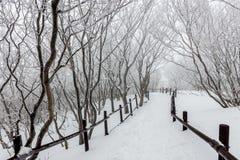 Nieve blanca del paisaje del invierno de la montaña en Corea Imagen de archivo