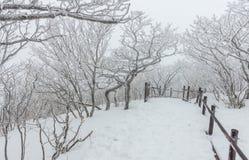 Nieve blanca del paisaje del invierno de la montaña en Corea Foto de archivo libre de regalías