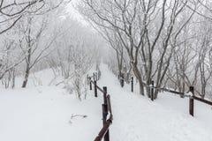 Nieve blanca del paisaje del invierno de la montaña en Corea Imágenes de archivo libres de regalías