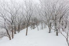 Nieve blanca del paisaje del invierno de la montaña en Corea Fotos de archivo