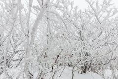 Nieve blanca del paisaje del invierno de la montaña en Corea Foto de archivo