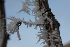 Nieve blanca en la rama imágenes de archivo libres de regalías