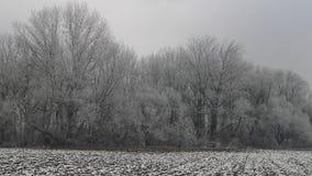 Nieve congelada en bosque fotografía de archivo