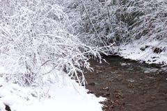 Nieve, cubierta, ramas Foto de archivo libre de regalías