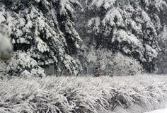 Nieve de abril Imagen de archivo