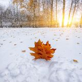 Nieve de FFirst en los árboles nevados del bosque en la madera Imagen de archivo libre de regalías