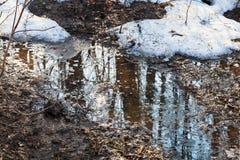 Nieve de fusión en bosque imagenes de archivo