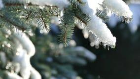 Nieve de fusión en el árbol de navidad Deshielo en invierno Los descensos del agua bajan de la rama de árbol metrajes