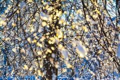 Nieve de fusión en las ramas de un árbol en luz del sol imagen de archivo