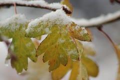 Nieve de fusión en una hoja Foto de archivo libre de regalías