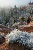 Nieve de la barranca de Bryce Foto de archivo