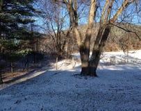 Nieve de la caída Imagenes de archivo