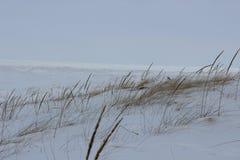 Nieve de la hierba del hielo del lago del paisaje de la playa del invierno gran de la escena grass fría de la duna Imagen de archivo libre de regalías