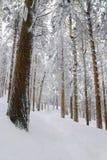 Nieve de la madera de pino Fotos de archivo libres de regalías