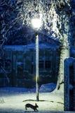Nieve de la noche con el tiempo frío del invierno de la linterna Imágenes de archivo libres de regalías
