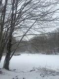 Nieve de la orilla del lago Fotos de archivo libres de regalías