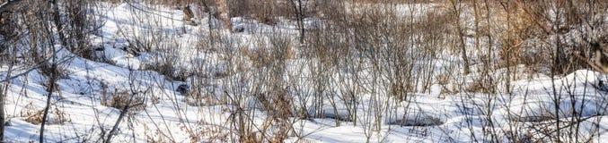 Nieve de la primavera Fotos de archivo