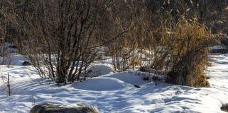 Nieve de la primavera Imagen de archivo libre de regalías