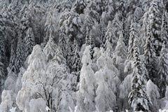 Nieve de la primavera Foto de archivo libre de regalías