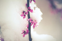 Nieve de la primavera Imágenes de archivo libres de regalías