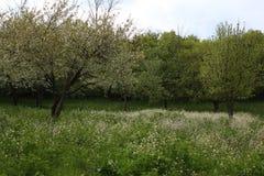 Nieve de la primavera Imagen de archivo