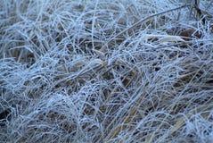 Nieve de la rama del abeto Fotos de archivo