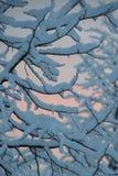 Nieve de las nevadas en rama de la cubierta del árbol imágenes de archivo libres de regalías