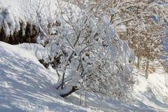Nieve de los árboles Imagen de archivo libre de regalías