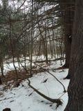 Nieve de marzo Fotografía de archivo