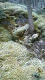 Nieve del arbusto del musgo de la montaña del túnel de Banff Fotos de archivo libres de regalías