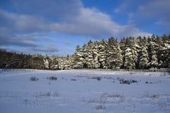 Nieve del bosque del onifer del ¡de Ð imagen de archivo