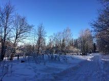 Nieve del invierno, árboles y el camino fotos de archivo libres de regalías
