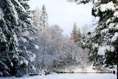 Nieve del invierno Foto de archivo libre de regalías
