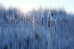Nieve del invierno de Frost foto de archivo