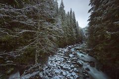 Nieve del invierno de la cala Imágenes de archivo libres de regalías