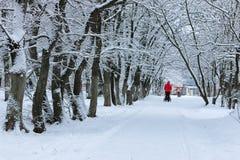 Nieve del invierno en PARQUE del árbol Fotografía de archivo