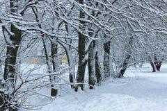 Nieve del invierno en PARQUE del árbol Imagen de archivo libre de regalías