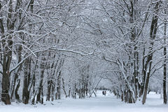 Nieve del invierno en PARQUE del árbol Imagenes de archivo