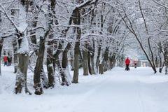 Nieve del invierno en PARQUE del árbol Fotos de archivo libres de regalías