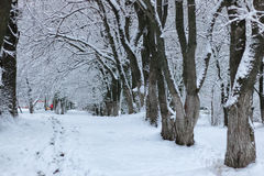 Nieve del invierno en PARQUE del árbol Foto de archivo