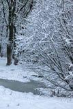 Nieve del invierno en PARQUE del árbol Fotos de archivo