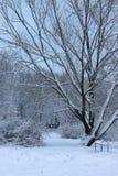 Nieve del invierno en PARQUE del árbol Imágenes de archivo libres de regalías