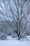 Nieve del invierno en PARQUE del árbol Imagen de archivo