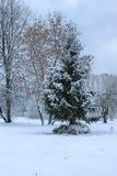 Nieve del invierno en PARQUE del árbol Foto de archivo libre de regalías